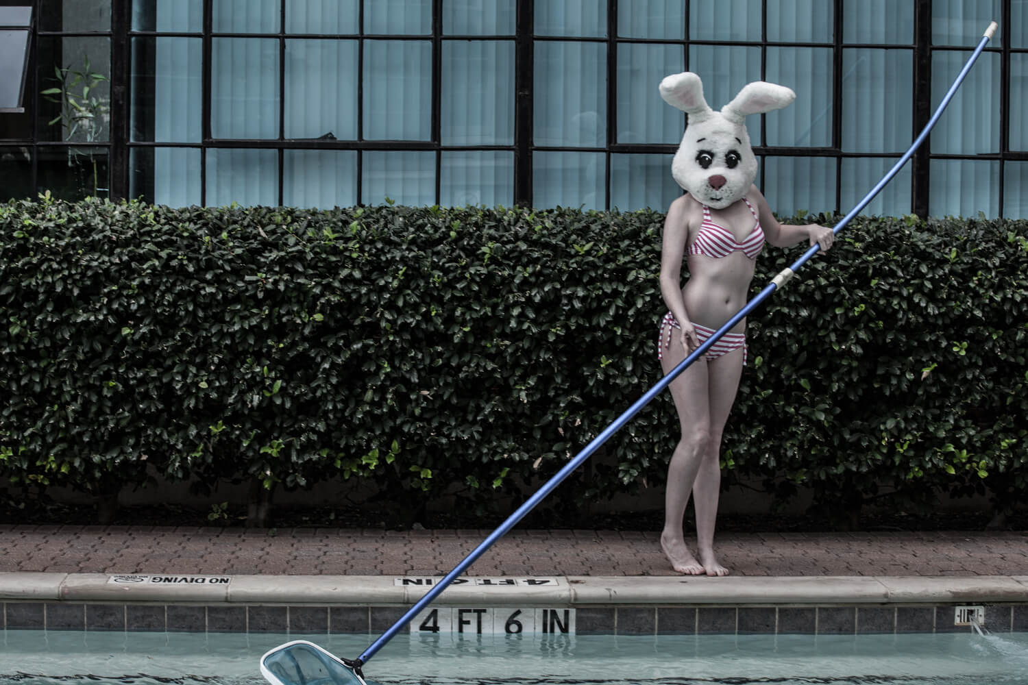 Personal project - White Rabbit: Cleaning the pool in a bikini