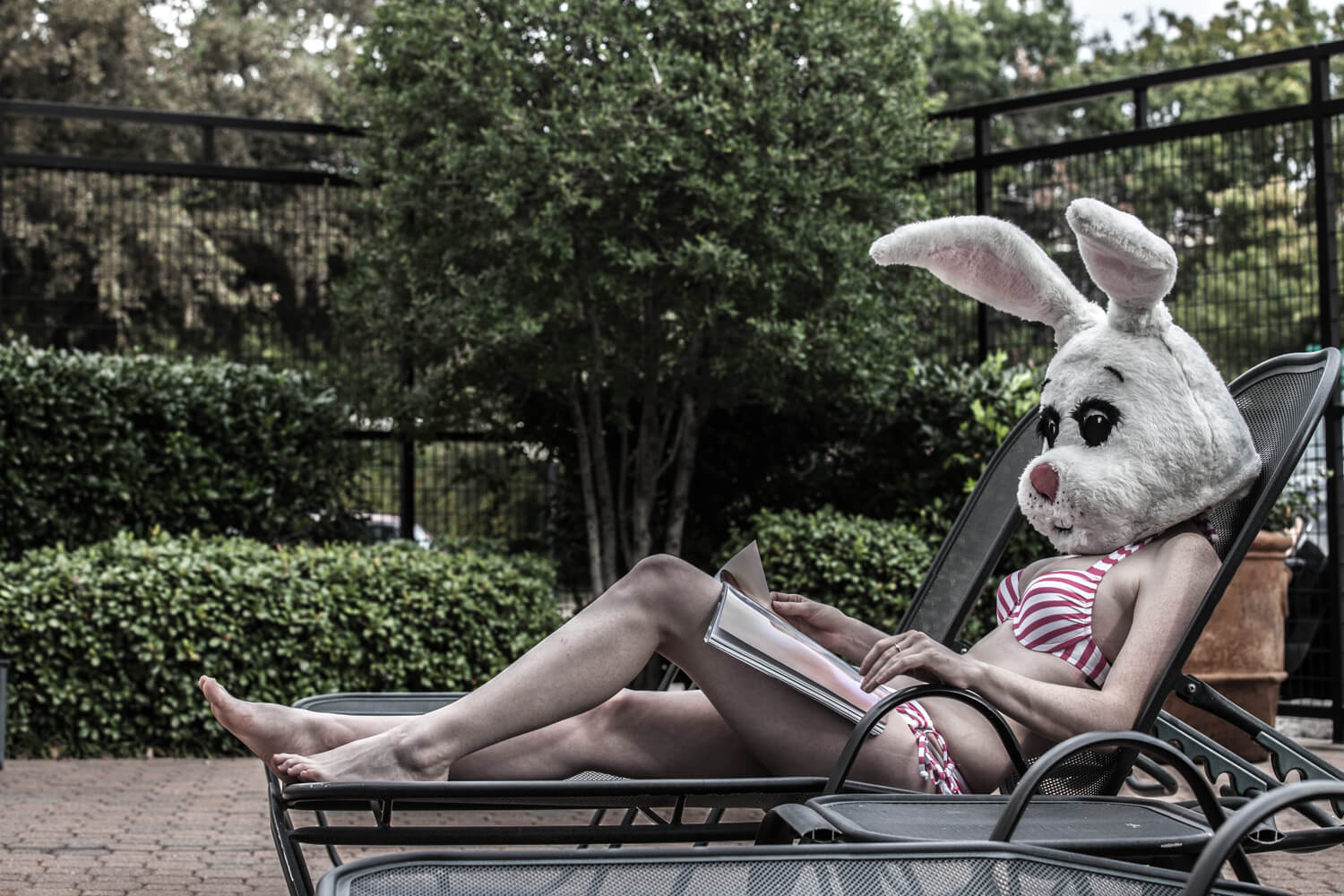 White Rabbit: American Bunny lounging on a beach chair reading fashion magazines